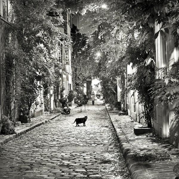 """""""Le chat de la rue des Glycines"""""""