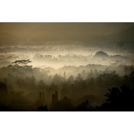 """Borobudur jungle 1"""