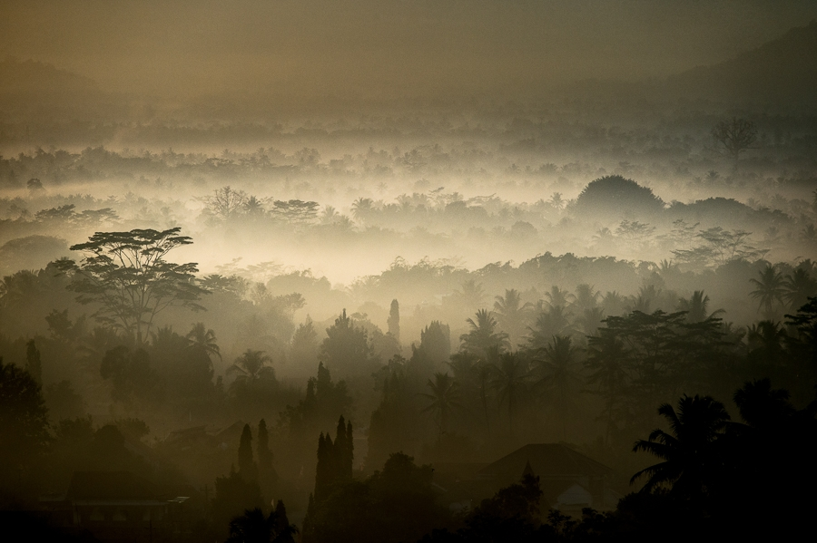 """Borobudur jungle 1"""