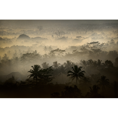 """Borobudur jungle 3"""
