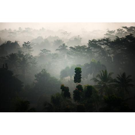 """""""Java jungle"""""""