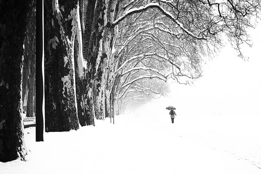 """""""Les griffes de l'hiver"""""""